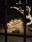 glories bush at night
