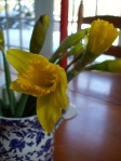 its the light daffodil