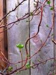 crouching down climbing vine