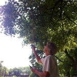 """sister rita """"canes"""" the linden tree"""