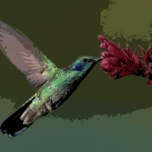 h-bird-6