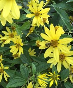 rapt-bee