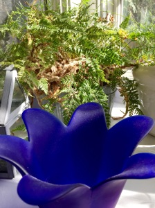 cobalt-spring