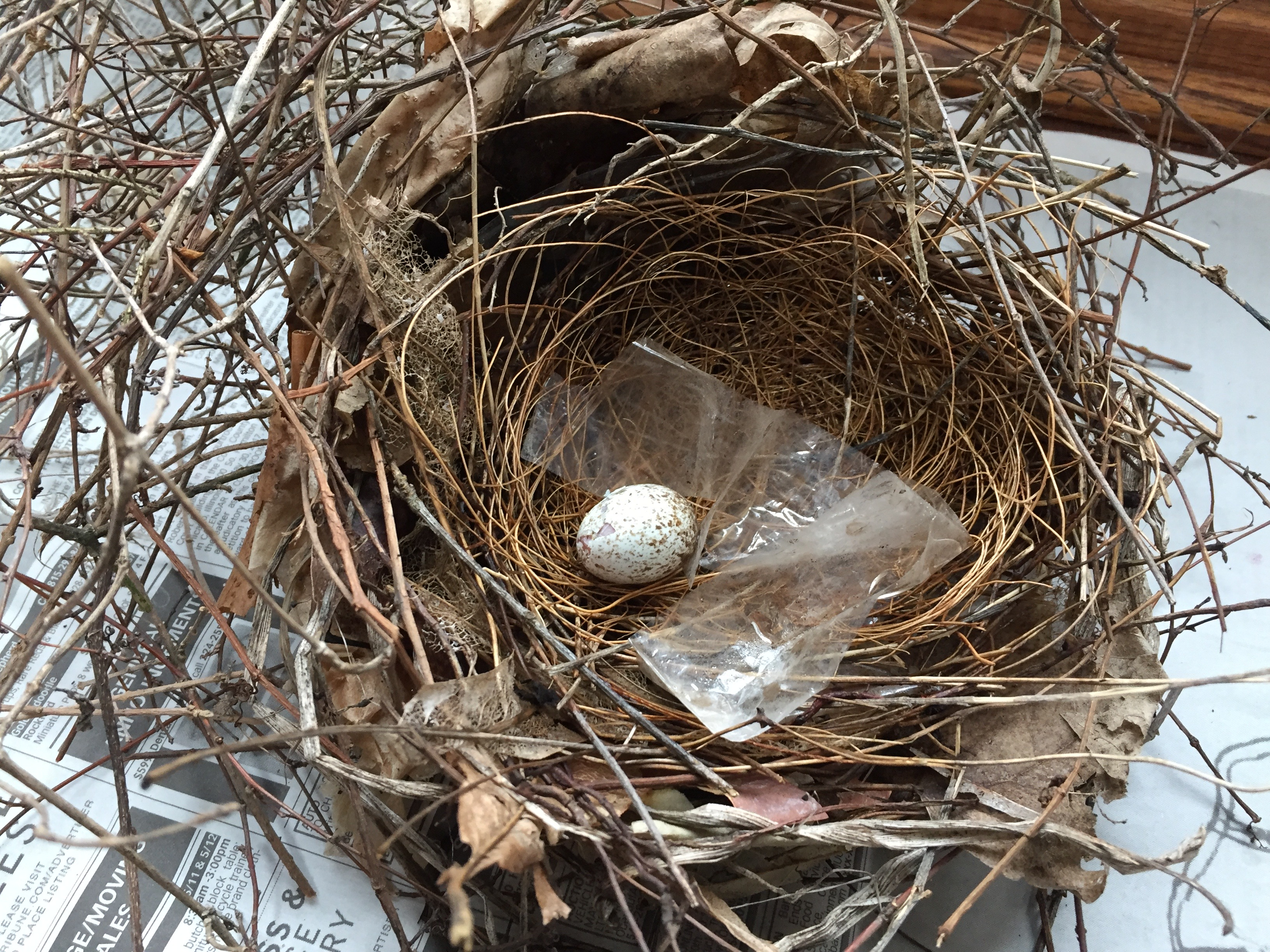fallen nest and egg