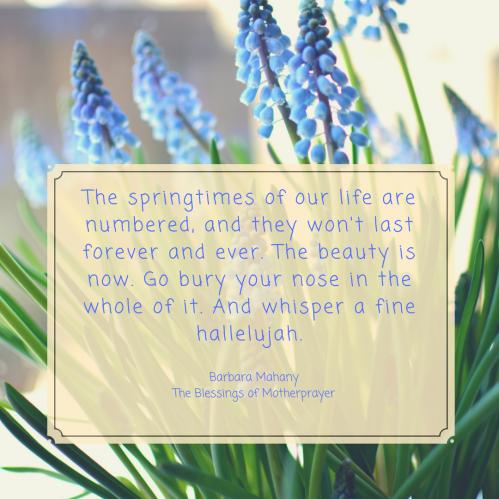 springtimes