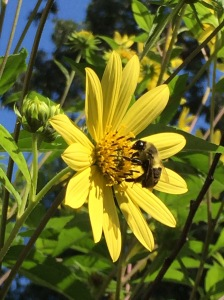 awe bee nuzzling