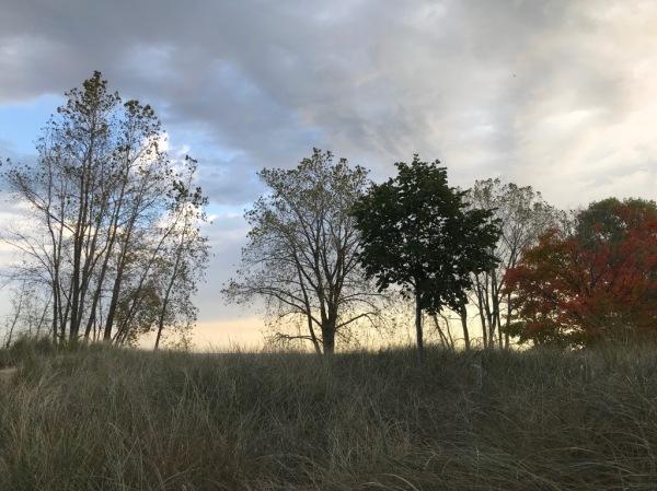 gillson row of trees